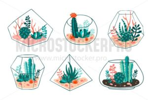Set of succulents and cactus with terrariums. Vector floral design - Vector illustrations for everyone | Microstocker.Pro
