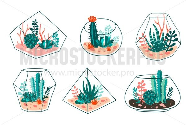 Set of succulents and cactus with terrariums. Vector floral design - Vector illustrations for everyone   Microstocker.Pro