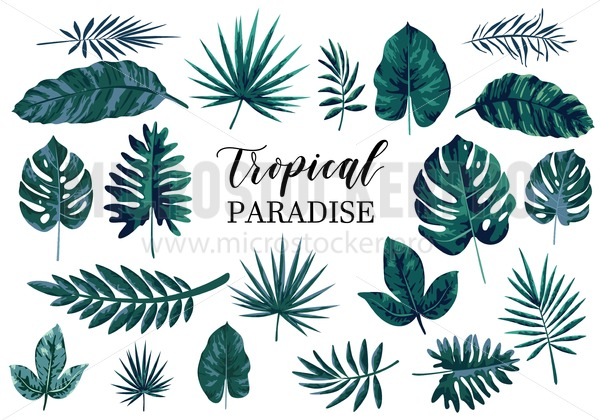 Tropical Leaves Set Isolated On White Background Modern Tropical Design For Greeting Cards Invitations Etc Microstocker Pro Wedding invitation green turquoise tropical leaves. tropical leaves set isolated on white