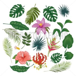 Cute tropical stickers and labels on white background. Summer set of leaves and flowers. Vector illustration - Vector illustrations for everyone | Microstocker.Pro