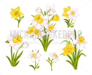 Set of beautiful narcissus flowers for cards, posters, textile etc. Cartoon narcissus vector illustration - Vector illustrations for everyone | Microstocker.Pro