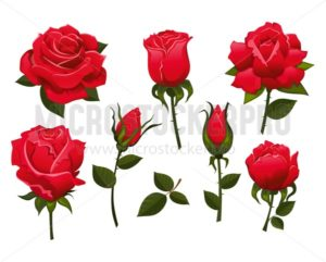 Set of beautiful red roses isolated on white background.Colorful vector roses for invitations, greeting cards, posters etc. - Vector illustrations for everyone | Microstocker.Pro