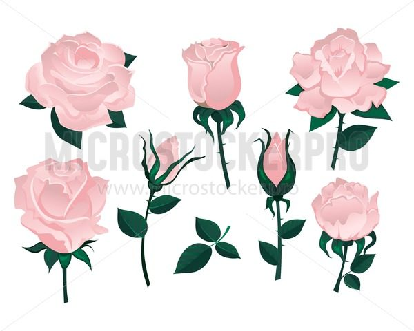 Set of beautiful roses isolated on white background.Colorful vector roses for invitations, greeting cards, posters etc. - Vector illustrations for everyone | Microstocker.Pro