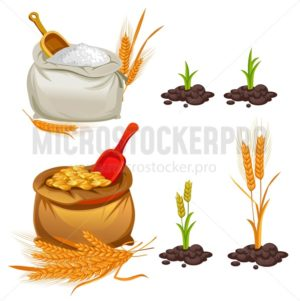 Wheat, oats and barley set. Cartoon flour, wheat bunches and pieces of plants. Vector illustration - Vector illustrations for everyone   Microstocker.Pro