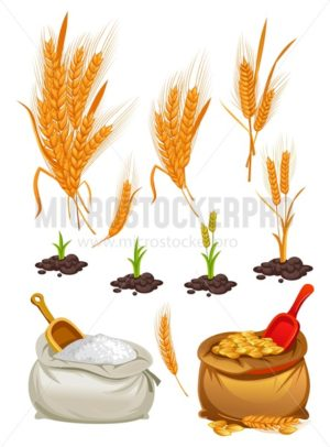 Wheat, oats and barley set. Cartoon flour, wheat bunches and pieces of plants. Vector illustration - Vector illustrations for everyone | Microstocker.Pro