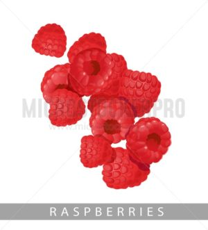 Raspberries isolated on white background.Summer berries vector in cartoon style. - Vector illustrations for everyone | Microstocker.Pro