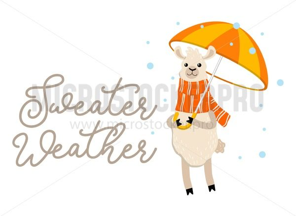 Sweater weather inspirational autumn design with llama holdind umbrella and wearing scarf. Cute alpaca illustration with lettering typography. Fall vector illustration or print. - Vector illustrations for everyone | Microstocker.Pro