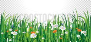 Summer flowers and grass on transparent background - Vector illustrations for everyone | Microstocker.Pro