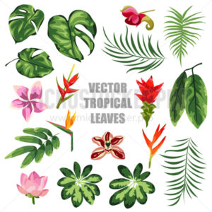 Set of tropical leaves and jungle art decoration - Vector illustrations for everyone | Microstocker.Pro