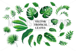 Set of tropical leaves and jungle art print - Vector illustrations for everyone | Microstocker.Pro